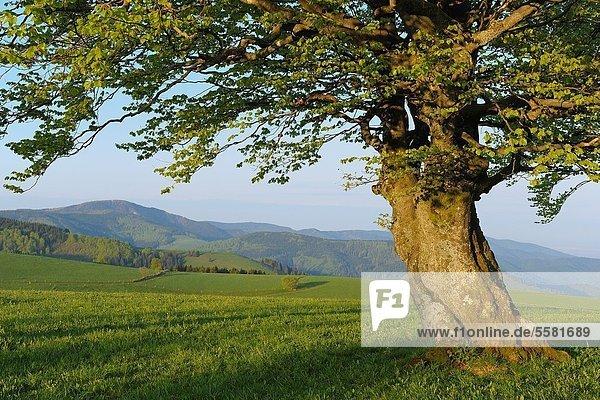 Baden-Württemberg  Schwarzwald  Deutschland Baden-Württemberg ,Schwarzwald ,Deutschland