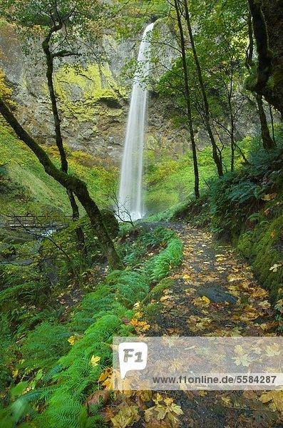Trail to Elowah Falls  Columbia River Gorge National Scenic Area Oregon
