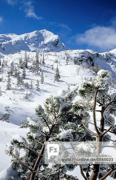 Winter scenery at Rohacska dolina  Zapadne Tatry - Rohace