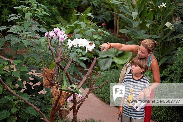 gehen  Sohn  Beispiel  Schmetterling  Entdeckung  Mutter - Mensch  Malaga  Spanien