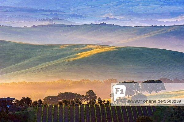 Europa  Morgen  Landschaft  Tal  Morgendämmerung  Nebel  UNESCO-Welterbe  Italien  Siena  Toskana