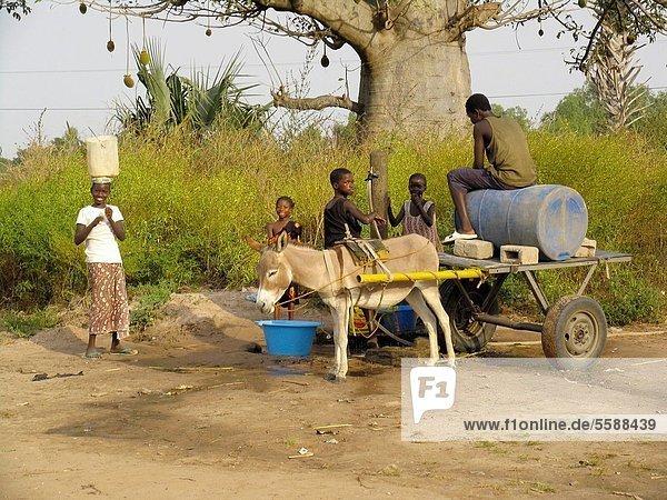 nahe  Wasser  Esel  füllen  füllt  füllend  Fuhrwerk  Dorf  Ziehbrunnen  Brunnen  Gambia  Hilfe