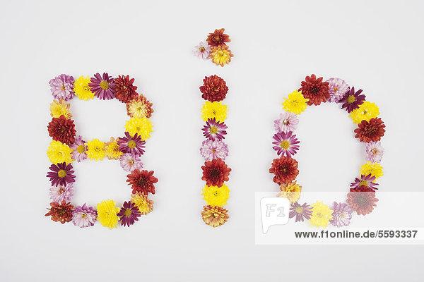 Text bio mit Chrysanthemenblüten auf weißem Hintergrund