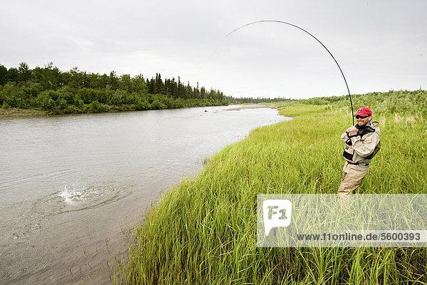 Fliegenfischer kämpft ein Rotlachs auf der Mulchatna River in der Bristol Bay  Südwest Alaska  Sommer