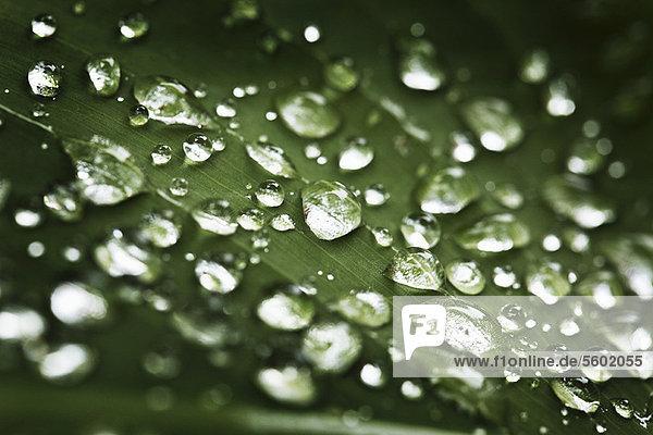Nahaufnahme von Wassertropfen auf dem Blatt