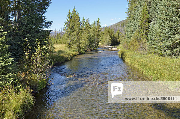 Upper course of the Colorado River  Coyote Valley Trailhead  Kawuneeche Valley  Trail Ridge Road  Rocky Mountain National Park  Colorado  USA