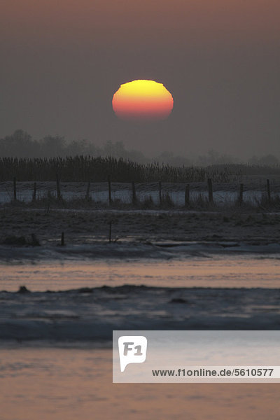 Sonnenaufgang über den Wiesen bei Prerow  Darß  Mecklenburg-Vorpommern  Deutschland  Europa