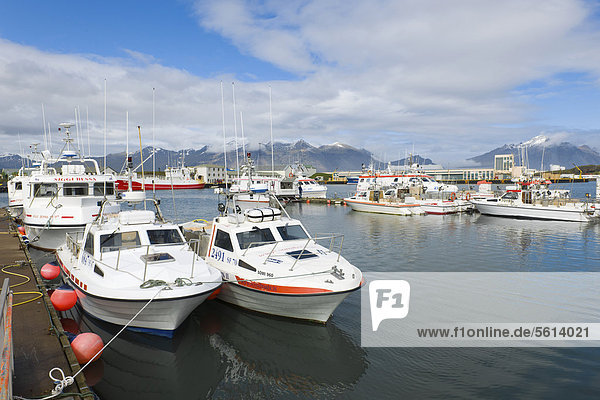 Kleine Fischerboote im Hafen  Höfn  Island  Nordeuropa  Europa