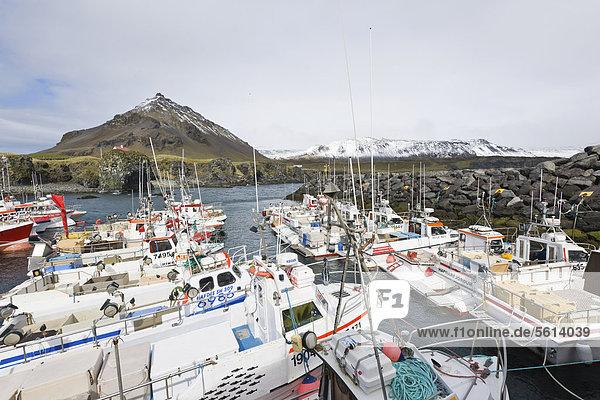 Basalt-Küste und der kleine Fischerhafen  Arnarstapi  Island  Nordeuropa  Europa