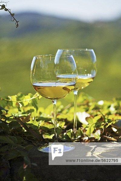 Zwei Gläser mit Weisswein in einer Landschaft im Friaul  Italien Zwei Gläser mit Weisswein in einer Landschaft im Friaul, Italien