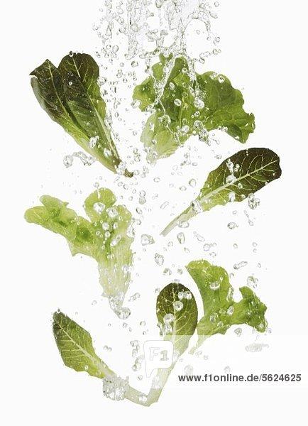 Salatblätter waschen