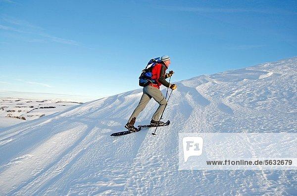 Hecht  Esox lucius  hoch  oben  Berg  Markierung  Bach  Gans  Hecht  Schneeschuhlaufen