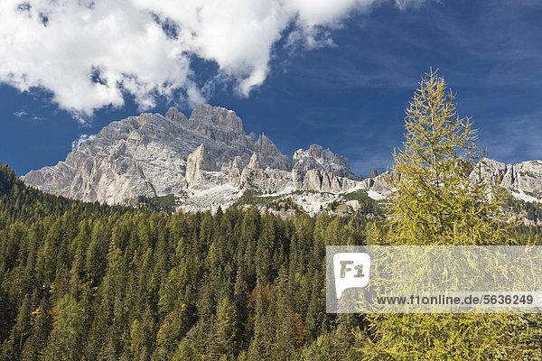 Gruppo dei Cadini  Auronzo di Cadore  Dolomiten  Italien  Europa