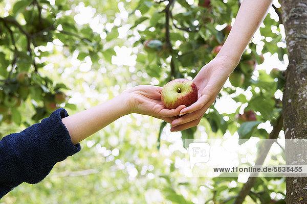Kinder pflücken Obst im Baum