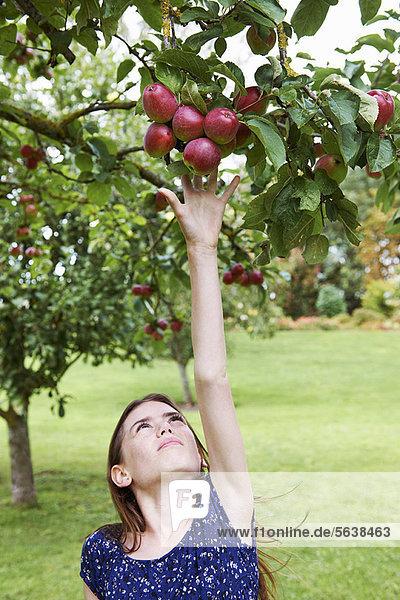 Baum  Frucht  aufheben  Mädchen