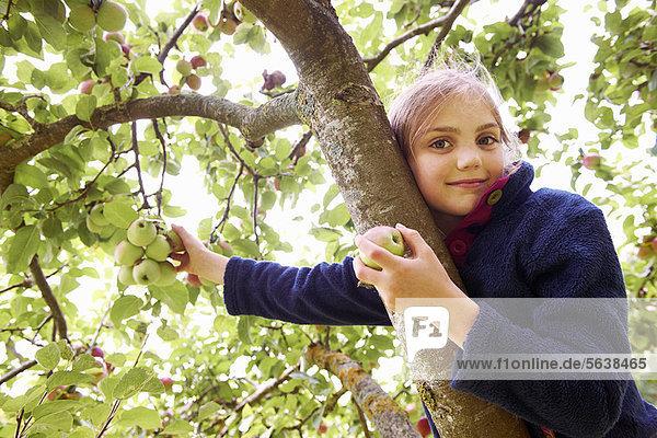 lächeln  Baum  Frucht  aufheben  Mädchen