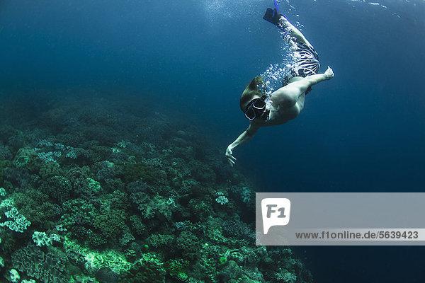 schwimmen  schnorcheln  Riff  Schnorchler