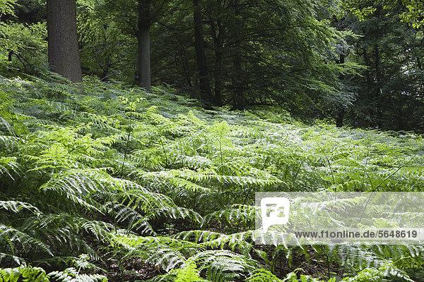 Europa  Deutschland  Nordrhein-Westfalen  Blick auf den Wald Europa, Deutschland, Nordrhein-Westfalen, Blick auf den Wald
