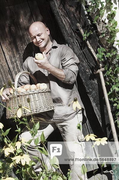 Österreich  Salzburg  Flachau  Reifer Mann mit Äpfeln im Garten