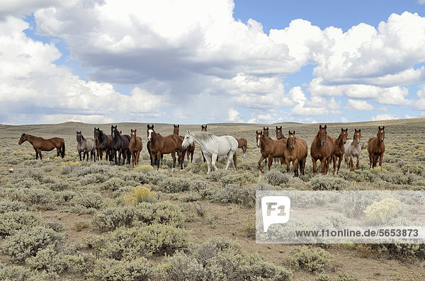 Herd of horses near State Road 230  Wyoming  USA