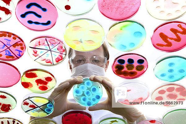 Analyse von Bakterienkulturen  Zucht von Bakterien in Petrischalen