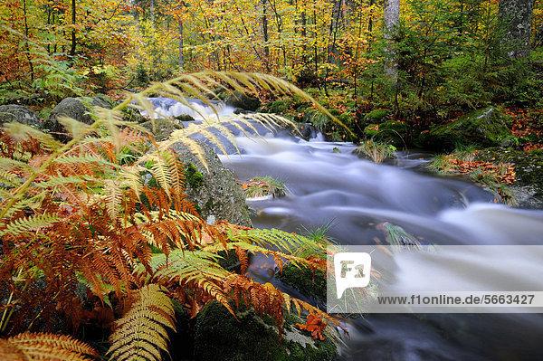 Bayerischer Wald Bayrischer Wald Bayerwald Europa Berg Laub Bayern Deutschland