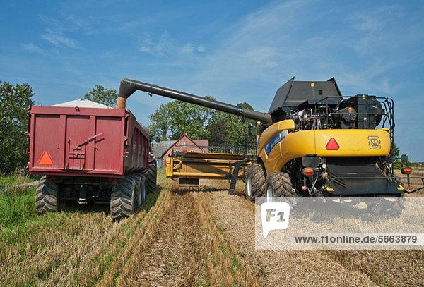Mähdrescher zum Einfüllen von Getreide in einen LKW
