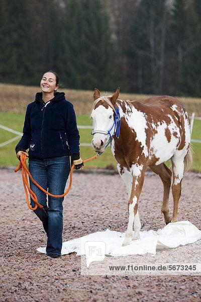 Frau geht entspannt mit Paint Horse über Plastikplane bei Bodenarbeit  Jungstute  Sorrel overo  Nordtirol  Österreich  Europa