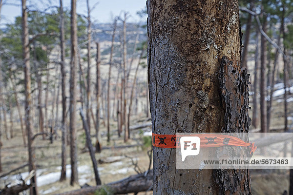 'A dead tree as a result of a forest fire at Devils Tower National Monument