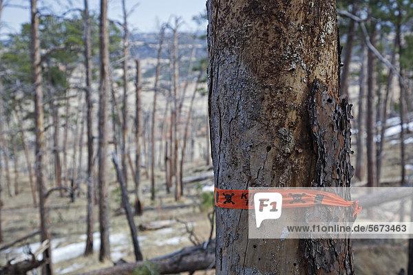 Ergebnis Wald Monument Feuer