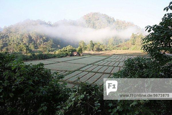 nahe Außenaufnahme Sohn Großstadt Dorf Feld Reis Reiskorn Entdeckung 3 sprechen Ethnisches Erscheinungsbild Lifestyle Mitglied Thailand