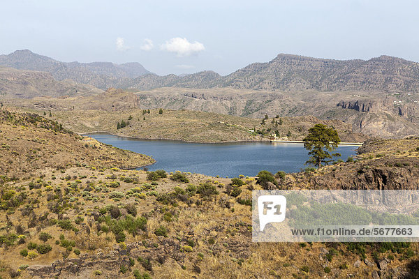 Lake El Juncal  a small reservoir in the Pinar de Pajonales National Park  Roque Bentaiga  Gran Canaria  Canary Islands  Spain  Europe  PublicGround