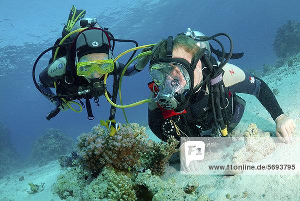 2 Taucher Afrika Clownfisch Harlekinfisch Ägypten Rotes Meer