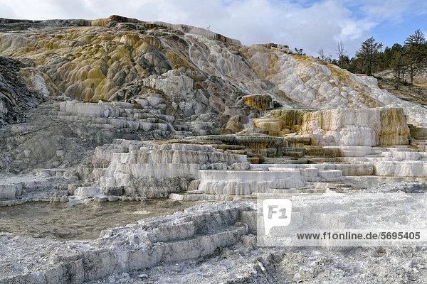 Living Color Sinterterrassen  von thermophilen Bakterien eingefärbt  Lower Terraces Area  Mammoth Hot Springs  Yellowstone National Park  Wyoming  USA