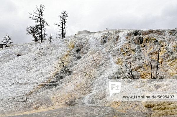 Living Color Sinterterrassen  teilweise von thermophilen Bakterien eingefärbt  Lower Terraces Area  Mammoth Hot Springs  Yellowstone National Park  Wyoming  USA