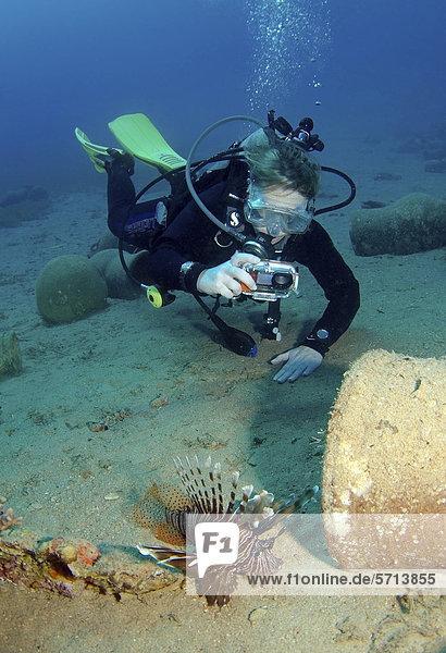 Taucher mit Fotokamera und ein pazifischer Rotfeuerfisch (Pterois volitans)  Rotes Meer  Dahab  Ägypten  Afrika