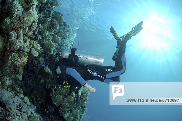 Taucher an einem Korallenriff  Rotes Meer  Ägypten  Afrika