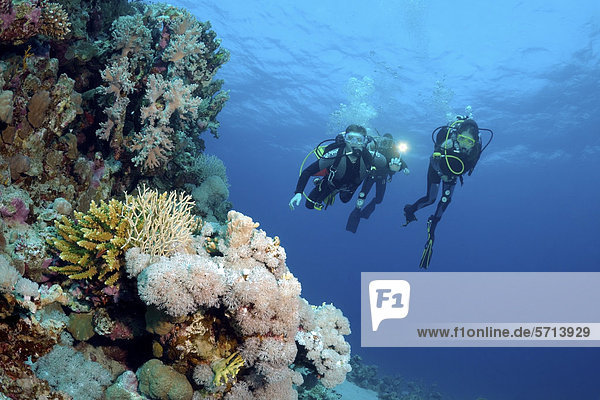 Divers at coral reef  Red Sea  Egypt  Africa