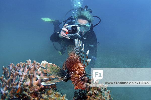 Taucher mit Fotokamera und einem pazifischen Rotfeuerfisch (Pterois volitans)  Rotes Meer  Ägypten  Afrika