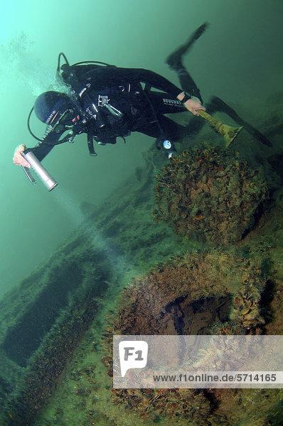 Taucher  Wracktauchen  Wrack der Lieutenant Zatsarennyj  Insel Zmiinyi  Schwarzes Meer  Ukraine  Osteuropa
