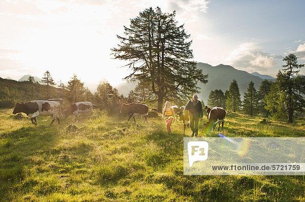 Österreich  Salzburger Land  Frau und Bauer beim Wandern auf der Alm mit Kühen