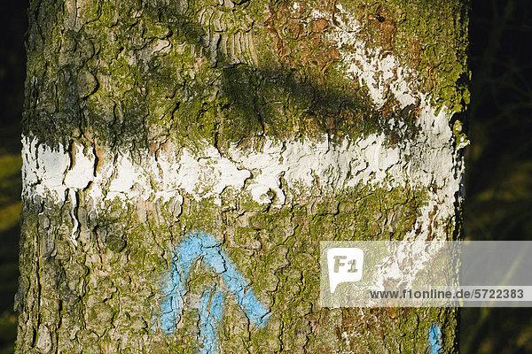 Deutschland  Gemaltes Pfeilschild auf Baumstamm  Nahaufnahme