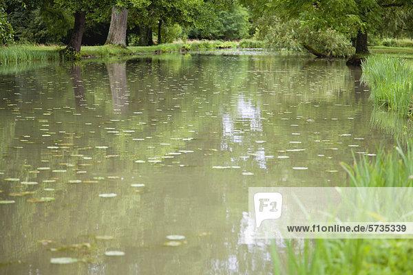 Tranquil pond