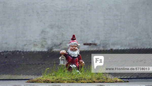Gartenzwerg als Nachtwächter  Oase inmitten Beton  Altstadt  Linz  Oberösterreich  Österreich  Europa  ÖffentlicherGrund