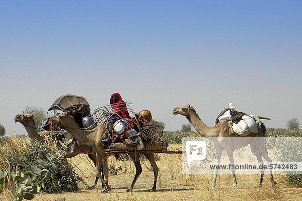 Kamelkarawane  Moudi Bereich  Tschad