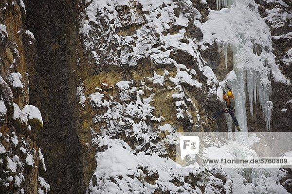 Ein Eiskletterer bewegt sich auf WD40 WI 4  Evan Thomas Creek  Kananaskis  Alberta  Kanada