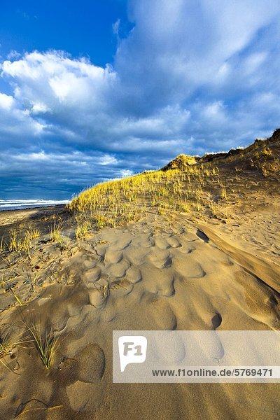Sand Dune  Cavendish Beach  Prince Edward Island National Park  Prince Edward Island  Canada