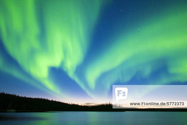 Aurora Borealis (Polarlichter)  borealen Wald  Umgebung von Yellowknife  Northwest Territories  Kanada