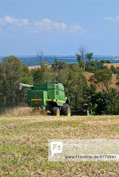 Kombinieren Sie ernten Winterweizen Ernte unter rollenden Ackerland in der Nähe von Cookstown  Ontario  Kanada