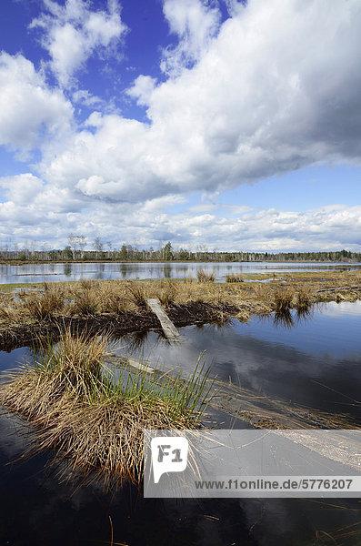 Geflutete Torfabraumhalde mit Wolkenspiegelung  Stammbeckenmoor bei Raubling im Voralpenland  Bayern  Deutschland  Europa